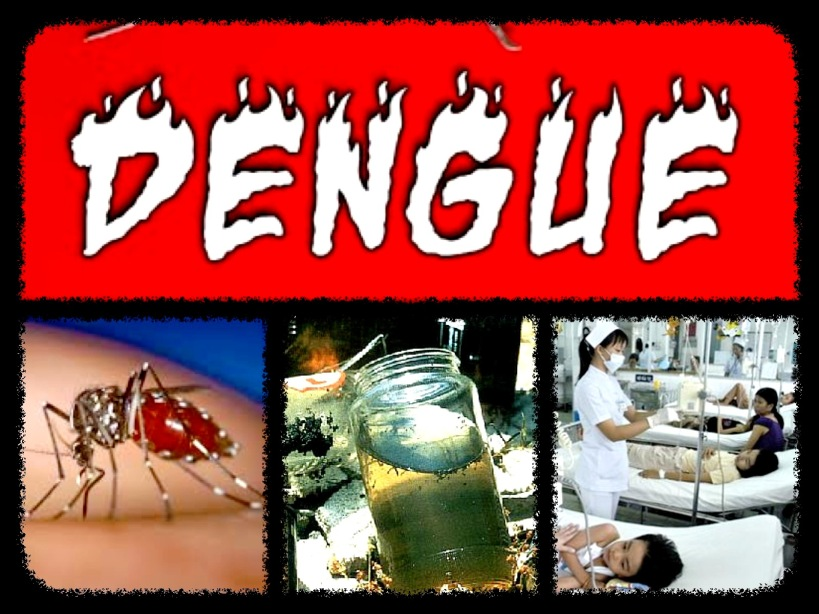 dengue-collage1