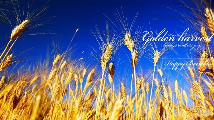 golden-harvest-happy-baisakhi-hd-wallpapers