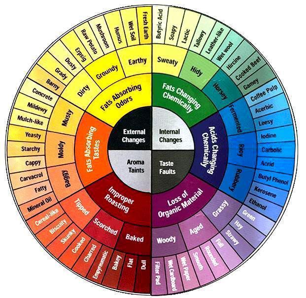 Copy of coffee tasters wheel