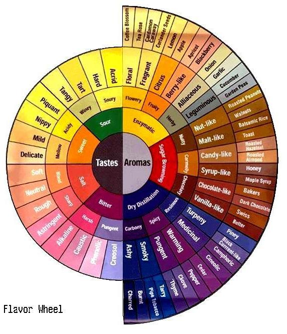 Copy of coffee tasters wheel